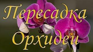 Пересадка орхидеи. Пересаживаю свою мини-орхидейку(Пересадка орхидеи. Пересаживаю свою мини-орхидейку. В этом видео я расскажу как пересадить орхидею в домашн..., 2016-03-20T14:04:17.000Z)