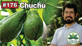 Autor da própria Saúde - Chuchu [hipertensão, diabetes, obesidade, inflamações]