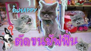 พามัฟฟินไปตัดขนที่ HAPPY LAND CAT HOTEL🐱