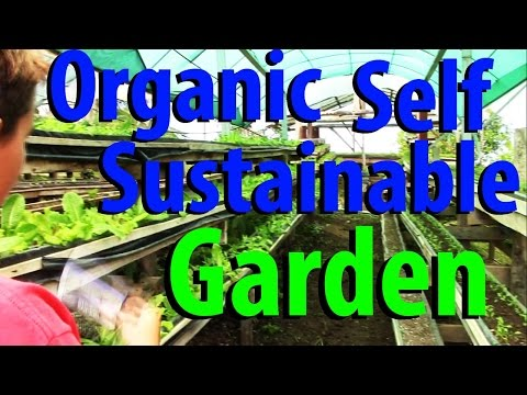 Organic Self Sustainable Garden - Hacienda Okhra - Kid Prepper