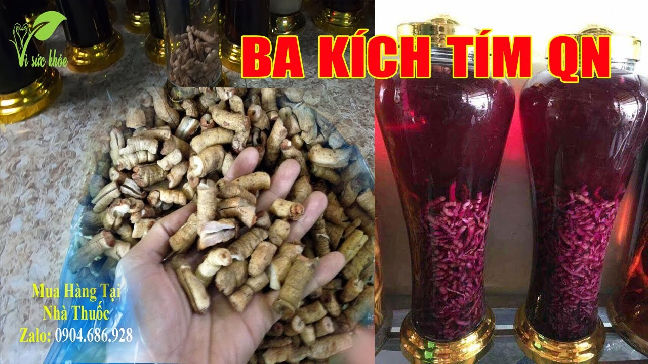 Cách Ngâm Rượu Ba Kích Tím Quảng Ninh đảm bảo tím 100% không tím đền gấp 3,4 lần