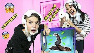 ¿QUÉ HAY EN LA CAJA? 3 / WHAT'S IN THE BOX CHALLENGE - Gibby :)
