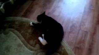 Коту наципил яйцо киндер