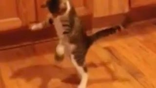 Basketball cat