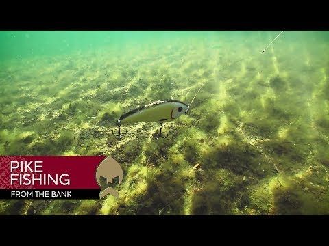 Pikefishing from the bank - Westin-Fishing