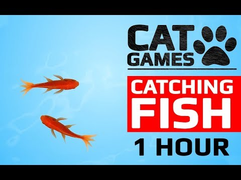 CAT GAMES - CATCHING FISH 1 HOUR VERSION (VIDEOS FOR CATS TO