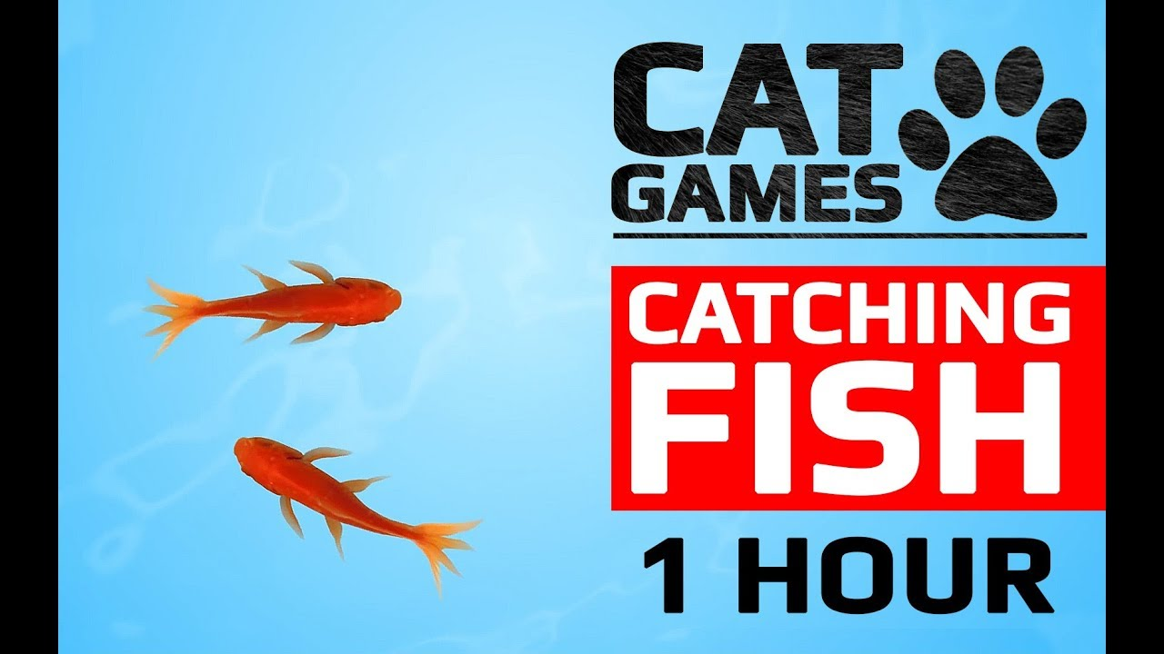 CAT GAMES - CATCHING FISH 1 HOUR VERSION (VIDEOS FOR CATS TO WATCH)