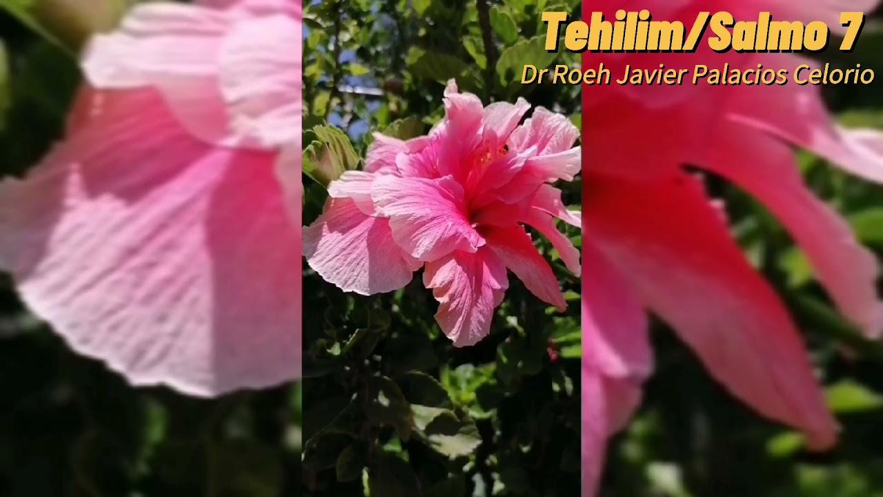 Tehilim/Salmo 7 🌱