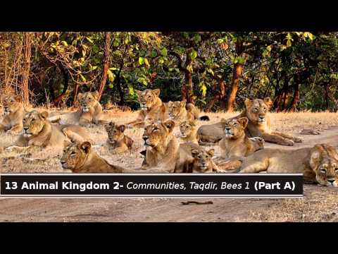 13 Quran & Science - Animal Kingdom 2: Communities, Taqdir. Bees 1 (Part A)