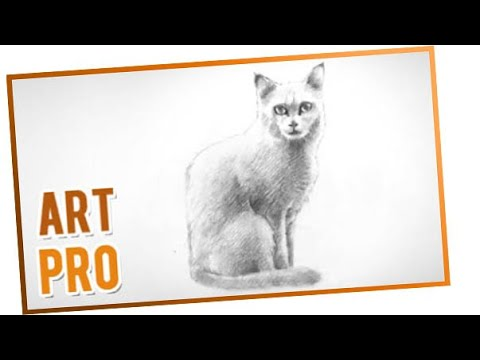 how to draw a cat step by step youtube