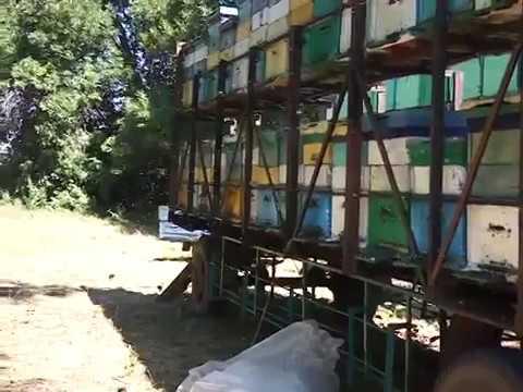 Откачка мёда на пасеке Жмайлова(буржуя). Кочевое пчеловодство.