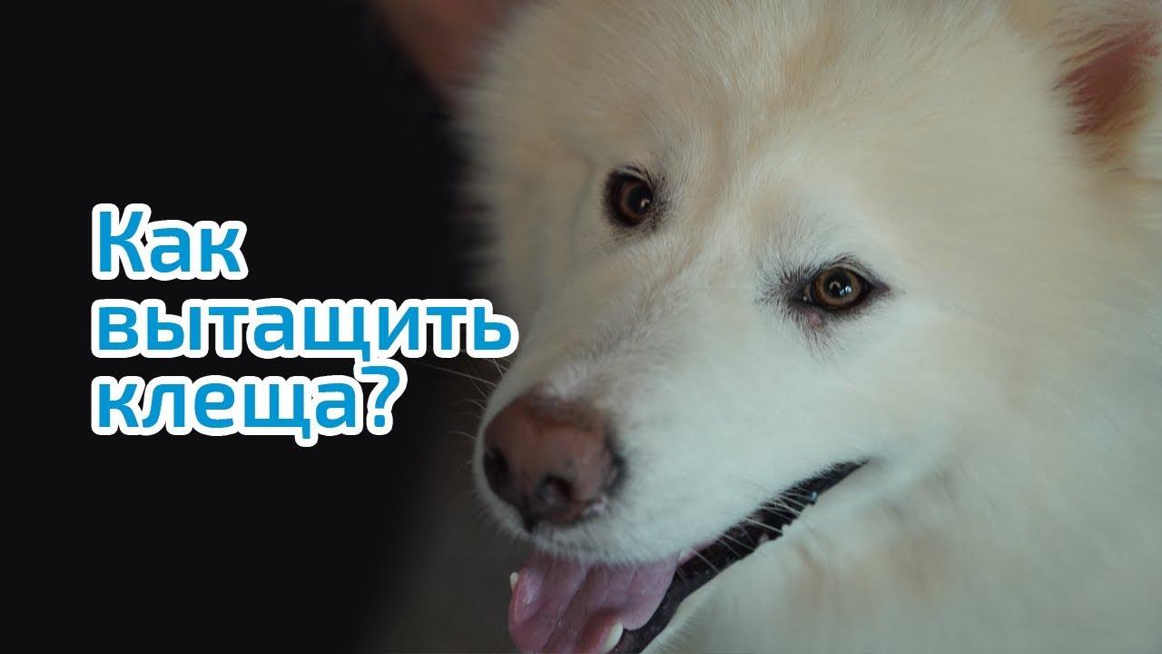 Как правильно обработать животное спреем от блох и клещей - YouTube