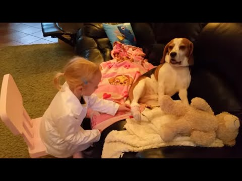 Little girl play veterinarian after her dog hurt his paw