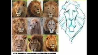 How to draw Lion Head Designs