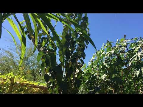 Laks Backyard Orchard Oct 2017