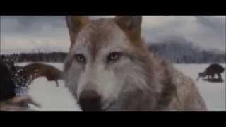 Meute de loup-garous