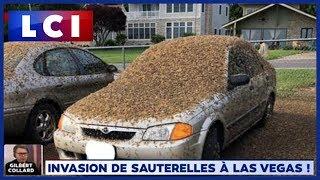 Etats-Unis : invasion de sauterelles à Las Vegas