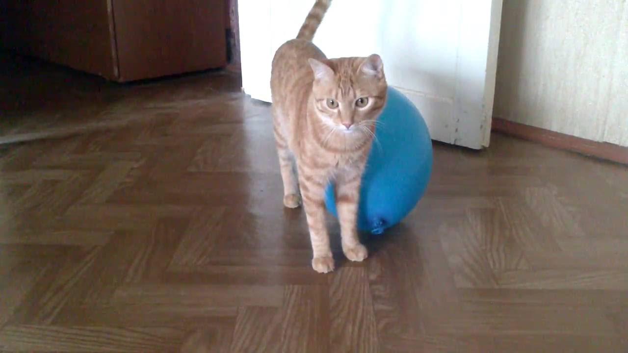 Коты боятся шариков