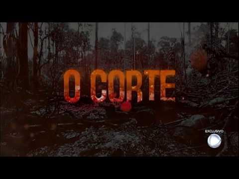 Câmera Record Mostra A Destruição Provocada Pela Produção Ilegal De Carvão Na Floresta Amazônica