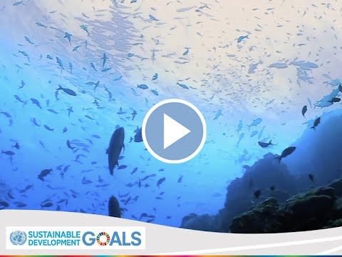 IMO's Global Action To Protect Marine Biodiversity