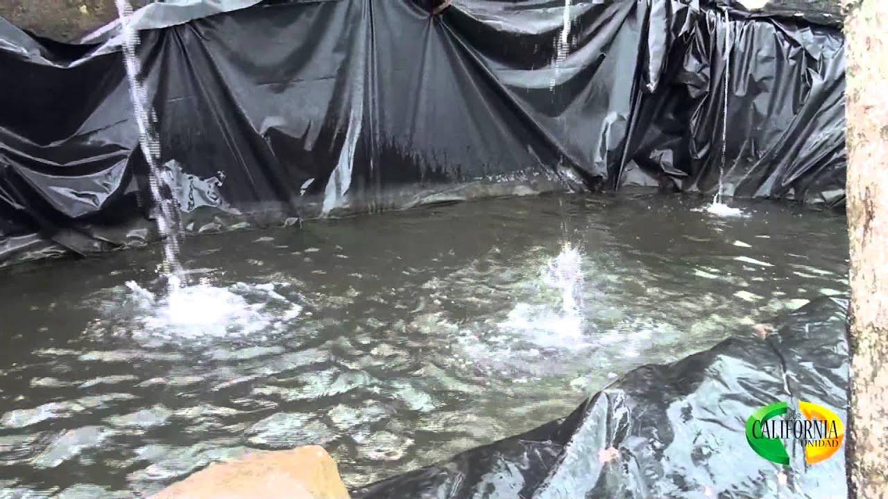 Proyectos de emprendimiento productivo piscicultura doovi for Jaulas flotantes para piscicultura