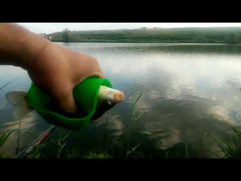Regulamentul si pescarii, prima data la pescuit pe Lacul Boteni 1, broasca deocheata de curca from YouTube · Duration:  31 minutes 1 seconds
