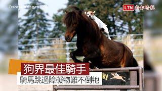 不是只有人類才能騎馬! 這隻小狗騎術了得