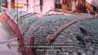 Repeat youtube video Les dégats de la pêche de grand fond