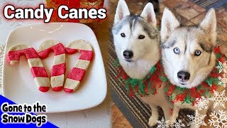 Candy Cane Cookies for Dogs | Christmas Dog Treats | DIY Dog Treats 111 |