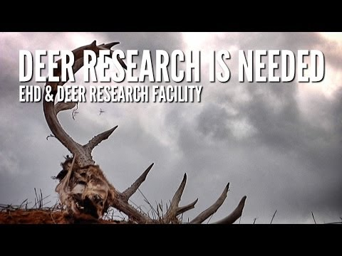 EHD Research Documentary - Texas Tech Deer Research Facility