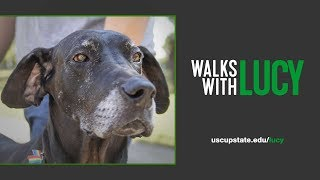 Walks With Lucy | Preview