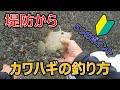 【初心者向け】堤防からのカワハギの釣り方