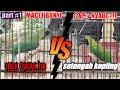 Trokbull Sayap Geter Masteran Pancingan Ngetrek Untuk Cucak Ijo Males Bunyi  Mp3 - Mp4 Download