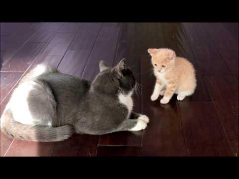 kittens friendship, kittens  kisses