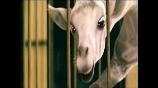 Video Seven Of Daran (La Leggenda Degli Animali Magici) - Doppiaggio Diadema service download MP3, 3GP, MP4, WEBM, AVI, FLV Oktober 2017