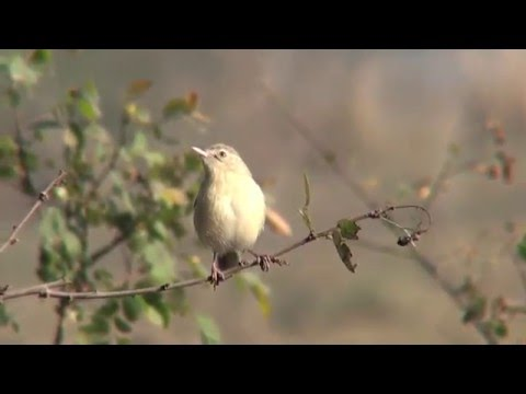 ROLE OF INDIAN BIRDS IN ECOSYSTEM