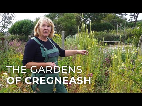 The Gardens of Cregneash: preserving the way people grew food 100 years ago