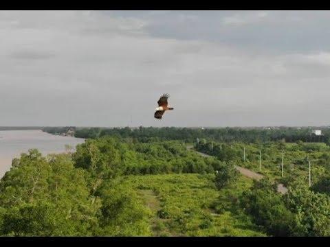 dji-mavic-air-fly-with-brahminy-kite