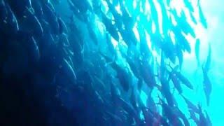 2011.07.30-7.31 粟国島フデン崎にてダイビング この筆ん崎というポイン...