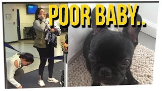 United Airlines Blamed For Puppy Loss f...