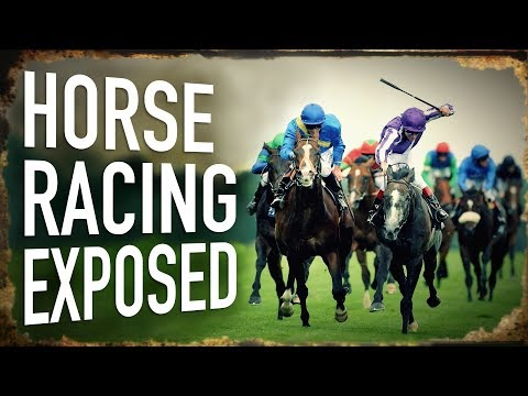 UNBELIEVABLE! Horse Racing Exposed: From Cradle to Grave