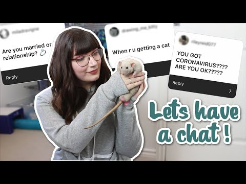 Answering Your Questions While The Rats Play | Q&A