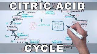 Citric Acid Cycle   Kreb's Cycle