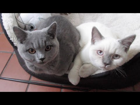 DEAR CHRIS: TURBO AND JET'S DAY OF FUN - CRAZY KITTENS