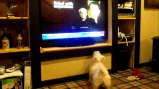 David Prosser Scott Walker Tv Ad And Our Westie