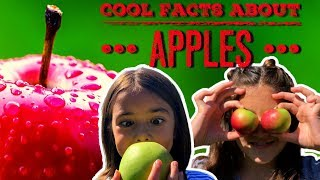 Apple Facts | Facts About Apples For Kids