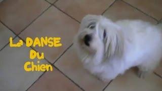 La danse du chien | Parodie Gangnam style - PSY
