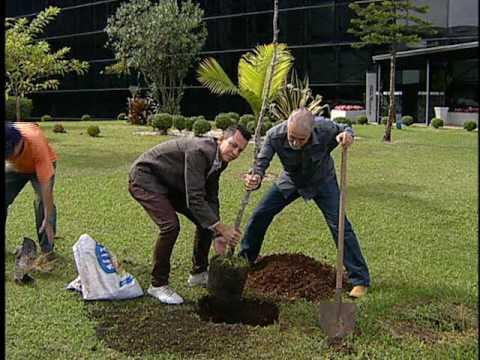 Acontece na Assembleia 20 de abril de 2017 - Plantio do Pau-Brasil