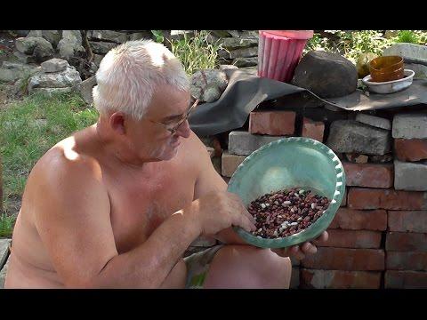 Как сохранить недозревшую фасоль