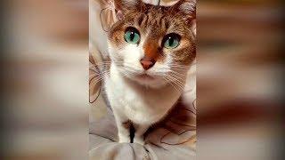Самые новые приколы с животными 2019 январь 12 Смешные видео про котов и собак до слез в мире